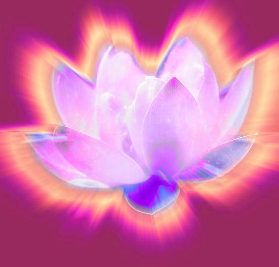 lotusfire2
