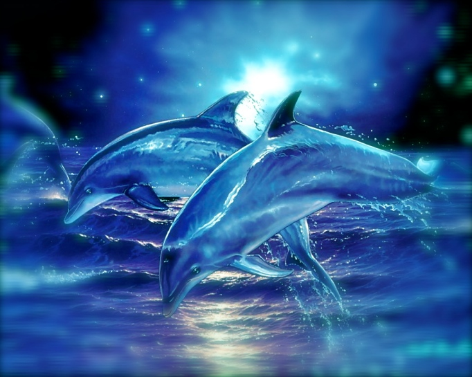 Dreaming With Dolphins