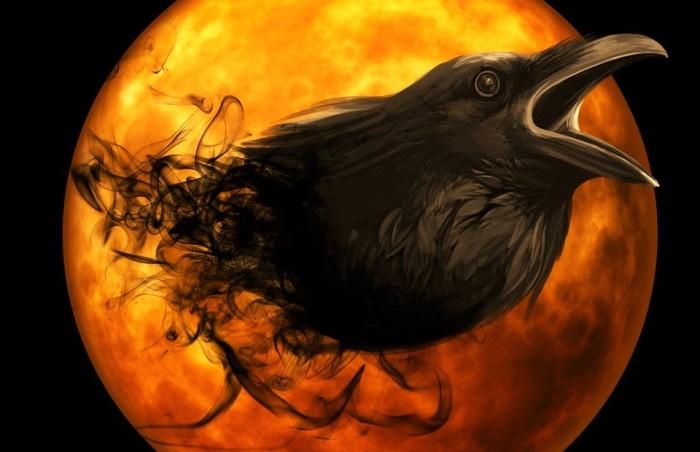 raven-988226_960_720