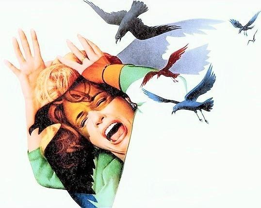 the-birds-film-images-008a00f3-65d3-466e-bcdb-9a45710d444-2