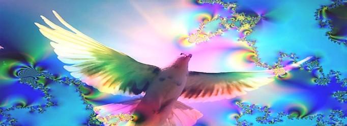 kleuren_duif-7